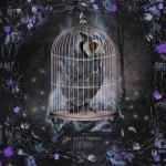 albumcover-owl3